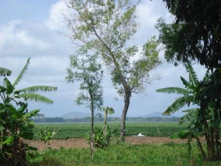 Memahami Pengertian Pertanian Bahan Kuliah Dan Informasi